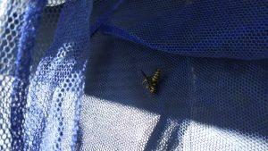 ハチの巣駆除作業 仙台