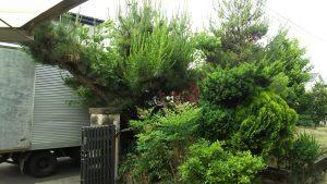 庭木伐採 仙台
