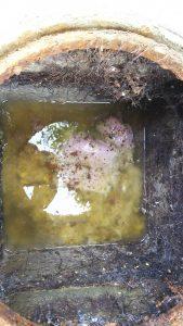 汚水桝・排水・詰り