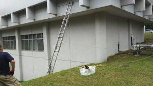スズメバチの巣を撤去作業 東北大学