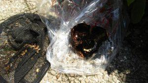 ハチの巣・スズメバチの巣駆除 仙台