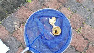 スズメバチの巣駆除仙台